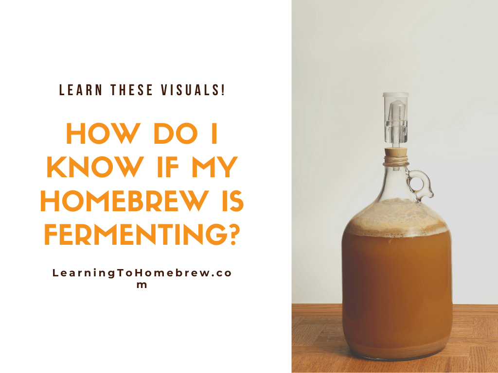 How Do I Know If My Homebrew is Fermenting