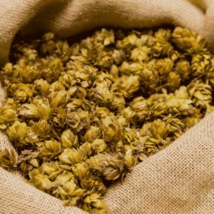 Dried whole hops