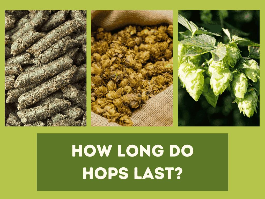 How long do hops last